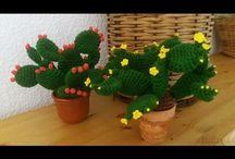 Cactus y setas y más