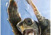 BEACH TURTLE LOVE