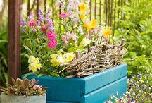 Garden Boxes & Pots