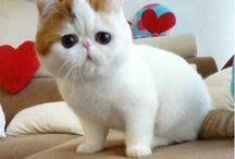 Katte wenslysie
