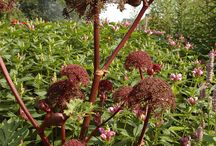 Medicin växter