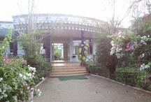 Jungle Home Resort