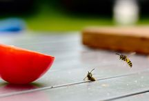 Bug/ Wasp killer