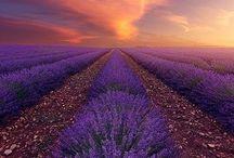 Purple Love / Everything purple related.
