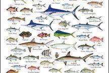 Fish ing