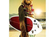 surfing wake