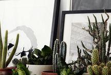 My Plants
