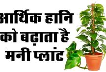 Chamatkari Lal Kitab Ke Totke || Vastu Tips For Money Plant