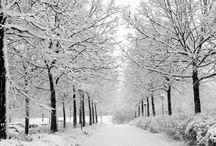 Winter:D