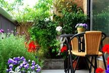 gardening / by Jillian Bartolo