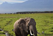 Mountain Climbing / One of our UrbanDaddies staff is doing #Kilimanjaro for #climb4cord and we're getting him inspired!
