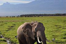 Elephants ❃