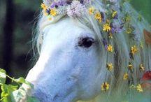 Unicorns / by Avery ❤️