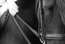 Equestriansm