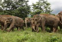 Wanderlust / Elephant Sanctuary