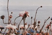 ✿ lovely bloom ✿ / Picturesque flowers bloomed on internet.
