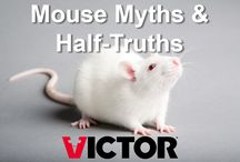 Mouse Myths & Half-Truths