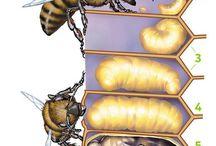 Interesting Entomology.