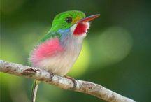 HUMMINGBIRDS / by Wendy Harrison