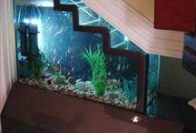 Akvaariot yleisesti