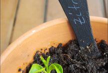 pflanzen ziehen