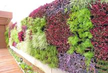 Extreme Color Vertical Gardens