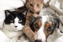 животные / о разных животных