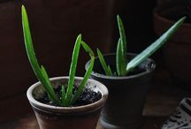 Planten / Planten