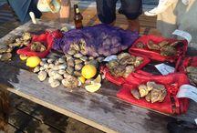 OYSTERS / Oysters. Oysters. Oysters.