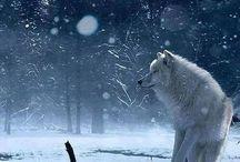 Animaux (Loups)