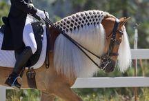 Coiffures chevaux