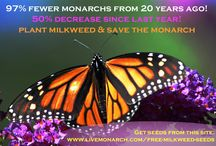 Saving Nature / How can we all help to save our beautiful planet.   www.omtoria.com