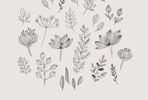 illustration plantes