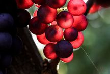 Grapes, Vines & Bottles / Pics, Descriptions, Articles of Wine Bottles, Grapes, Wine Growers'n'Makers.