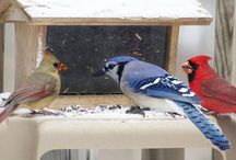 Birds and Feeders