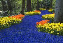 Amazing Gardens & Plantings