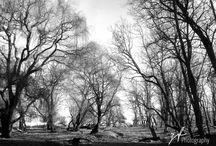 Landscapes...Black & White