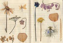 flower pressings / by Le Chipp