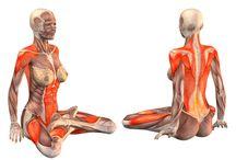 Yoga muscles