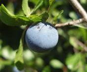 Informace o bylinkách / informace o bylinkách a sběru plodin