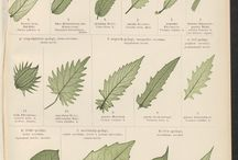 Botanical arts / Leaves, flowers and other part of plant - draw, embroidery, craft