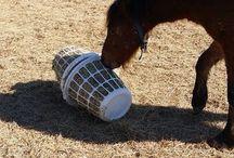 hest og stall