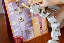 Human Body Education