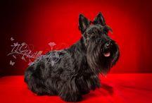 TLC Photography - Pets / Pet Photography