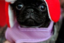 #PugLife