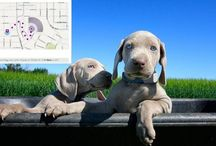 Pet Tech / Pets are participating in the technology revolution, too! #pets #tech