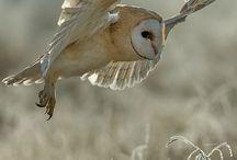 Direction / movement Nature