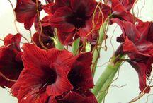 Dutch Flowers - Encyclopedia
