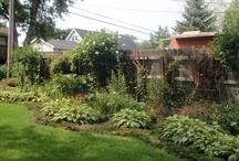 Garden/Lawn / by Mrs. Romeo