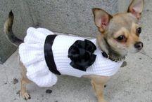 cappottini cane